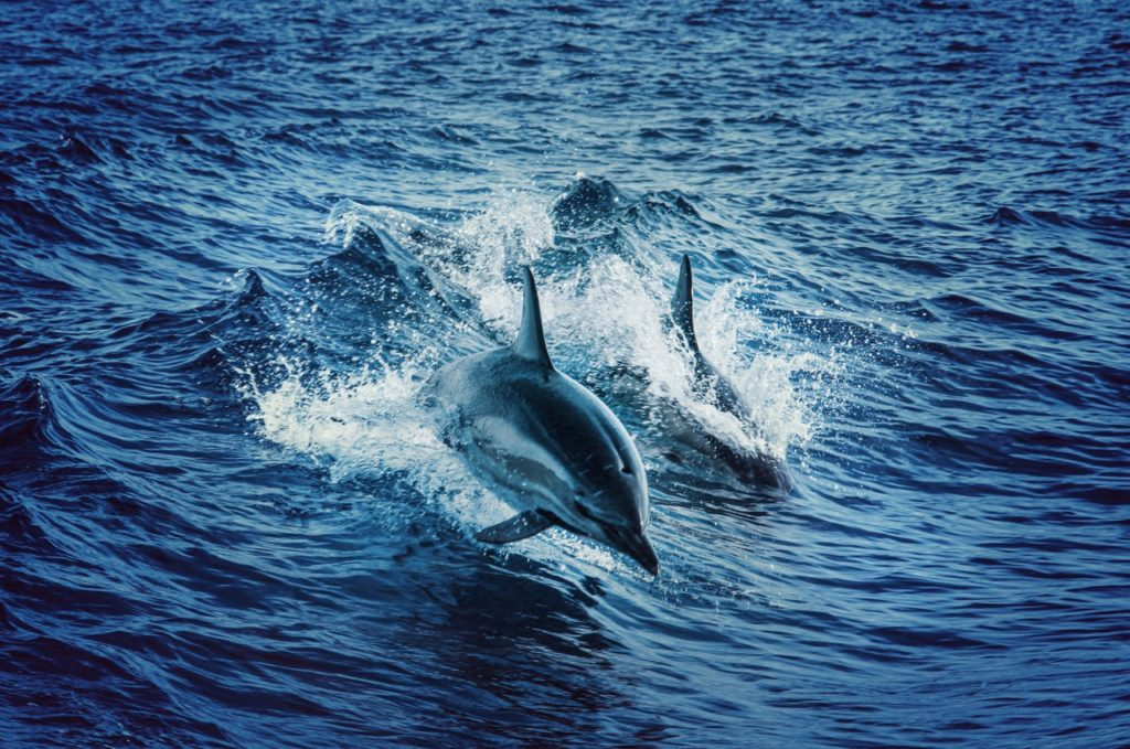 Wildlife in the Dodecanese: dolphins
